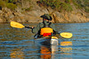 4729 Jay paddling away